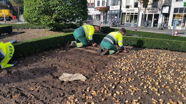 Photo of Rotonde De Brink Zwolle wordt mooi aangeplant door Rova
