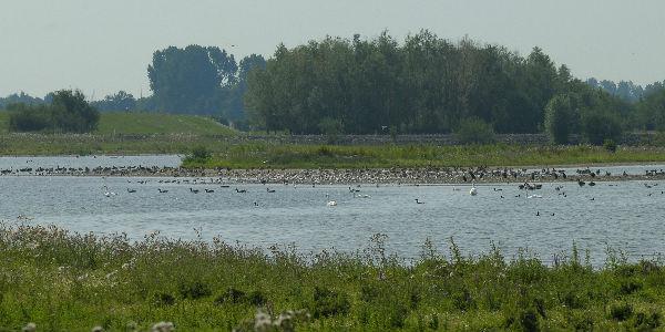 Photo of Vogels kijken in de Vreugderijkerwaard