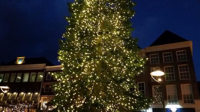 13 meter, 20 meter? Hoe hoog zou de boom zijn?