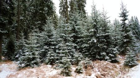 Photo of Kerstbomenactie 7 en 14 januari 2015: Oude bomen vangen veel winst!