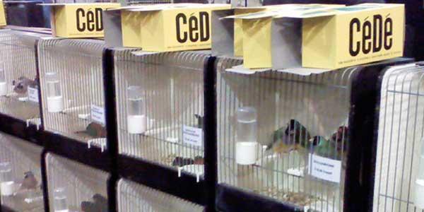 vogelmarkt-zwolle