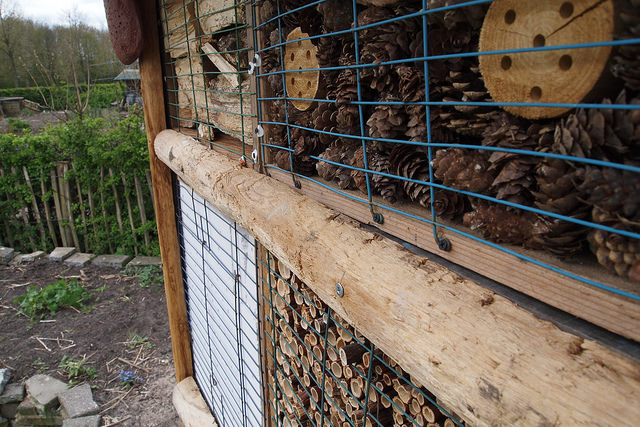 Photo of Dahliavereniging bouwt insecten hotel