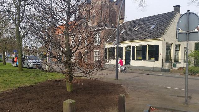 Photo of Op Nahuysplein pronkt weer een trotse rode beuk