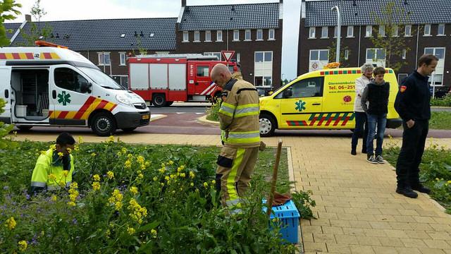Foto: Dieenambulance Zwolle - Dierenambulance Zwolle komt in actie om kat te redden uit duiker in Stadshagen