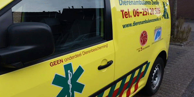 Photo of Dierenambulance bevrijdt duif uit auto-grill