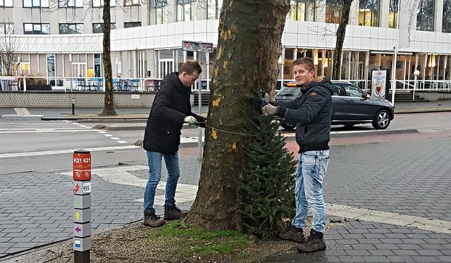 Photo of 500 kerstbomen wijzen de weg naar de Zwolse binnenstad