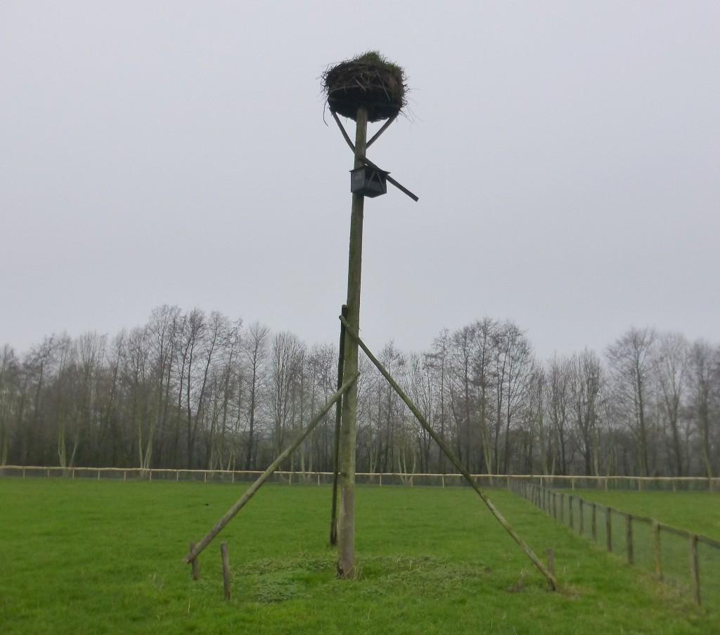 Ooievaar oud nest