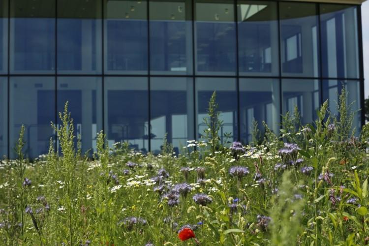 Photo of Wehkamp prijswinnaar groene ondernemer voor natuurlijker Hessenpoort