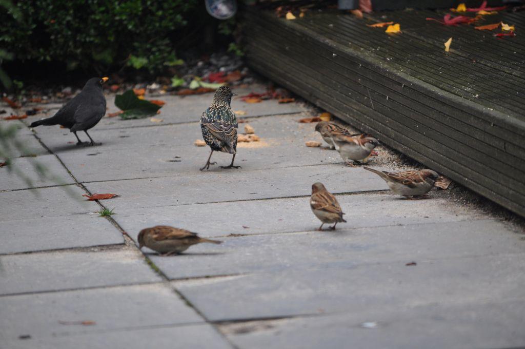 Photo of Doe jij ook mee met de Nationale Tuinvogeltelling dit weekend?