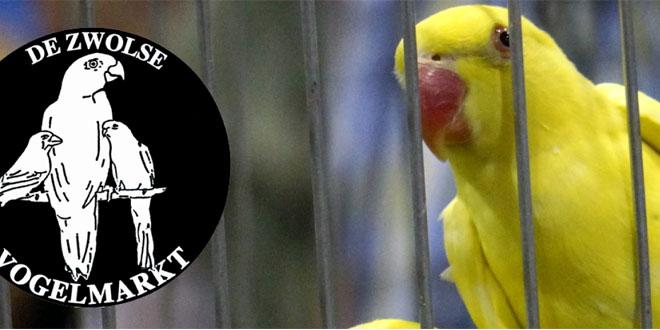 Photo of Tienduizenden vogels te koop op Zwolse Vogelmarkt