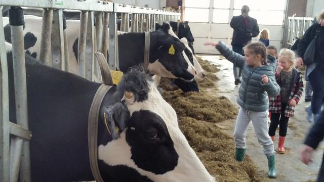 Koeiendans bij boer Harold van Vilsteren - Berkum Zwolle