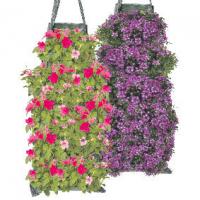 Wandhanger met perkgoed: In de wandhangers zul je diverse groot- en of kleinbloemige Petunia's aantreffen. Maar ook Bacopa, Helichrysum met Bidens, en bijv. Verbena met Bacopa.