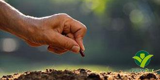 Een- en tweejarigen en groenten kunnen nu in de volle grond gezaaid worden.