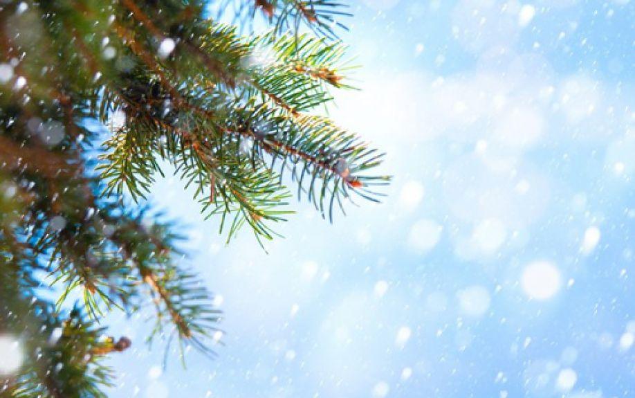 Photo of Grote wensboom voor kerstwensen op Nieuwe Markt Zwolle