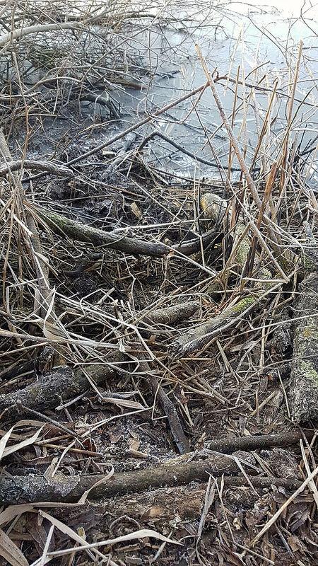 Photo of VIDEO – Beverhol gevonden bij kolk naast IJsseldijk Zwolle Zuid; waterschap niet blij