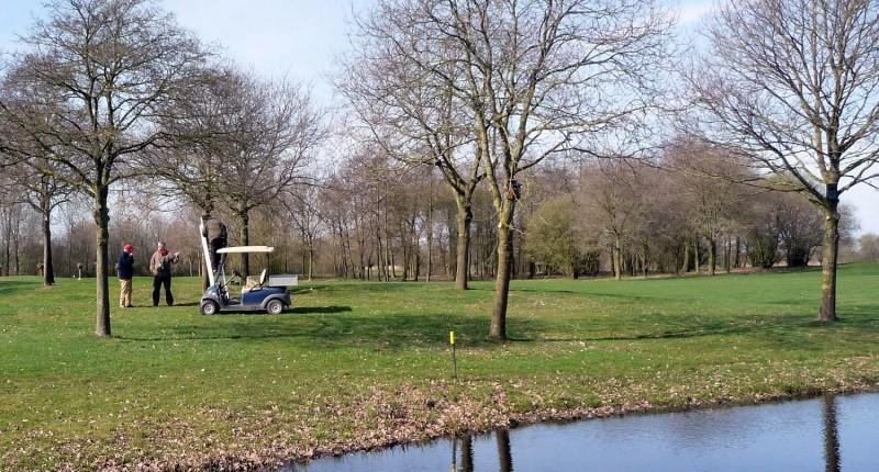 Photo of Spreeuwen gaan helpen met het onderhoud op de Zwolse golfbaan