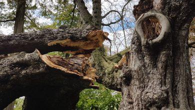 Photo of Door storm gevelde boom in park Eekhout trok veel bekijks