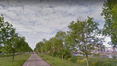 Photo of Half miljoen om zieke essen in Zwolle te vervangen
