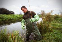 Photo of Muskusrattenpopulatie Noordoost Nederland sterk afgenomen