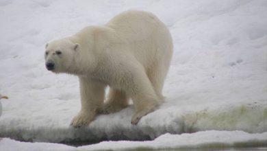Photo of Lezing naar de Noordpool