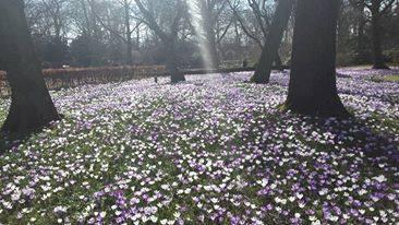Photo of Wisselvallig lenteweer