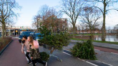 Photo of Kerstbomenactie levert ruim achtduizend bomen op