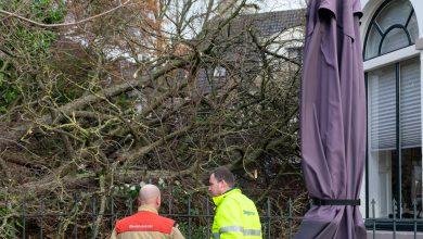 Photo of Oude boom bij Villa Suikerberg geveld door storm