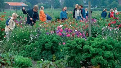 Photo of ROVA zoekt vrijwilligers voor jeugdtuinen in Stadshagen en Zwolle-Zuid
