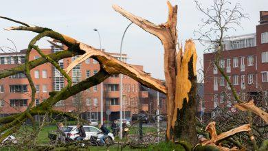 Photo of Bliksem verwoest grote boom in Frankhuis Stadshagen