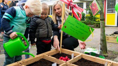 Photo of Peuters in Aa-landen telen eigen groente