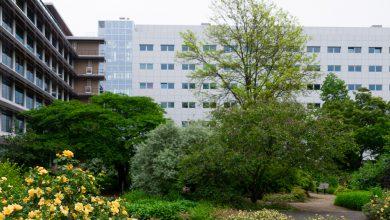Photo of Provincie blaast nieuw leven in tuin van Mien Ruys