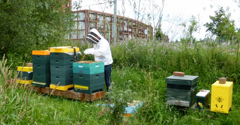 Photo of CDA Zwolle wil bijen Stadshagen redden