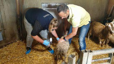 Photo of Jaarlijkse Dier Ok-check bij Zwolse dierenweides