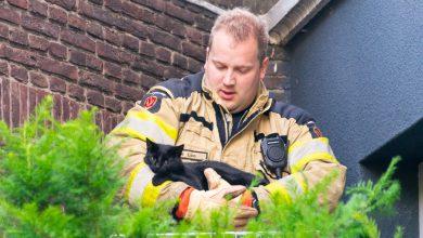 Photo of Brandweer redt gewonde kat in Diezerpoort