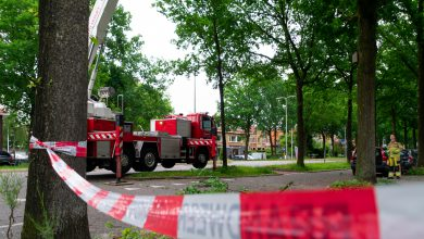 Photo of Grote tak scheurt door harde wind uit boom Wipstrik