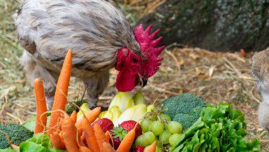 Photo of In beeld: Groentetaart voor dieren tijdens Dierenwelzijnsmarkt