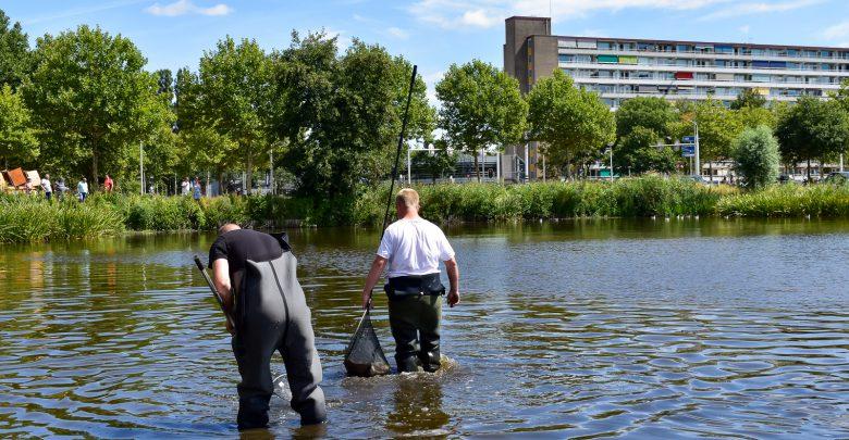 Photo of Waterschap tracht massale vissterfte Dobbe-vijver te voorkomen