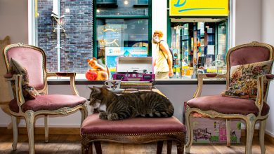 Photo of Kattencafé Skatjes in Zwolle geopend