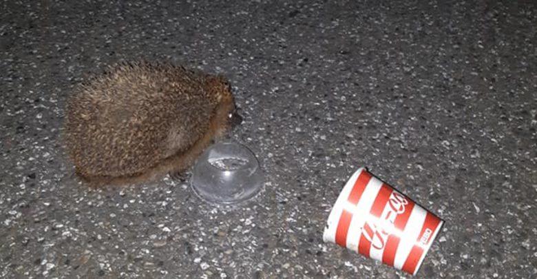 Photo of Egel gevonden in milkshakebeker