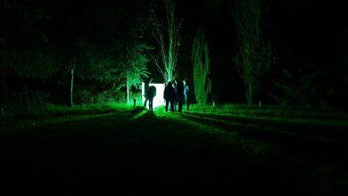 Photo of Zwolle pakt uit tijdens Nacht van de Vleermuis met Nachtdieren