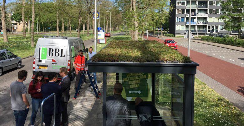 Photo of Scholen & bedrijven gaan samen Zwolle vergroenen