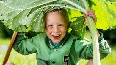 Photo of Gratis groentezaad voor basisscholen en BSO's uit Zwolle