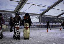 Photo of Zwols schaatstalent krijgt baan