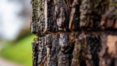 Photo of Bomen planten om de klimaatveranderingen tegen te gaan