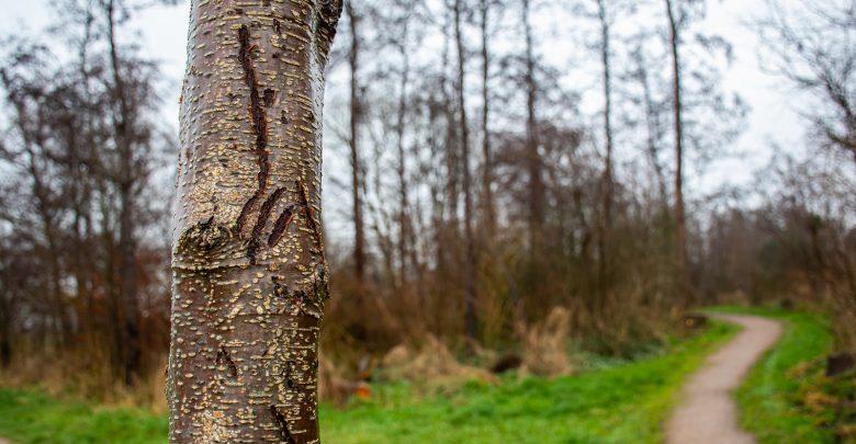 Photo of Bomensubsidie van provincie Overijssel gaat weer open