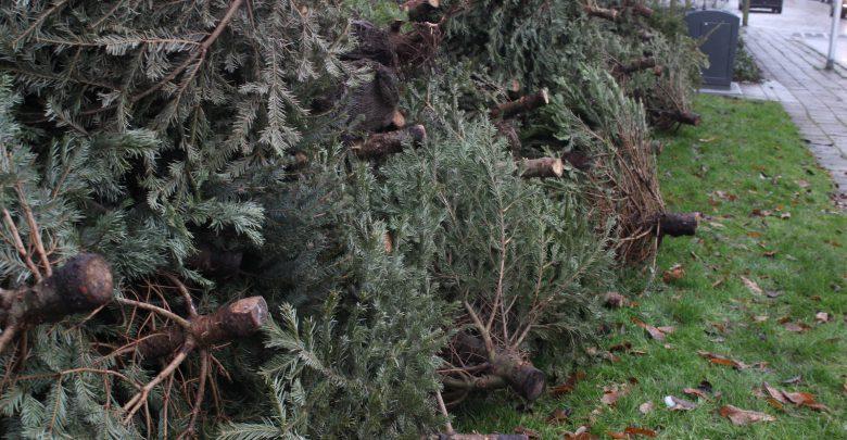 Photo of Kerstbomenactie levert 11.170 bomen op