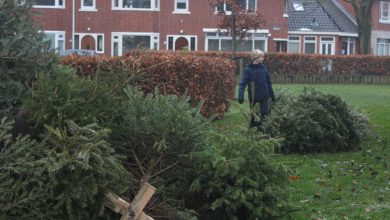 Photo of Zwolse kinderen zamelen een recordaantal kerstbomen in