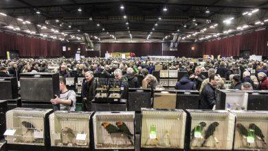 Photo of Zwolse Vogelmarkt in de IJsselhallen
