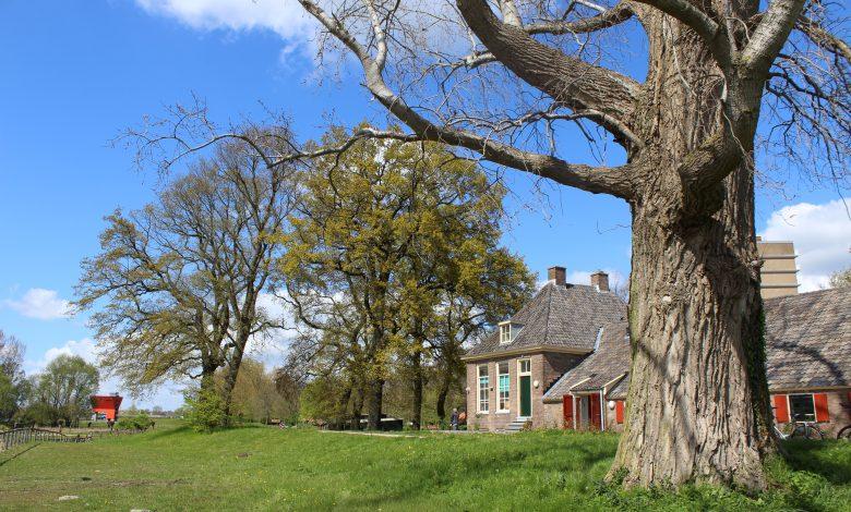 Photo of Onderzoek aan bomen voor dijkversterking Stadsdijken Zwolle