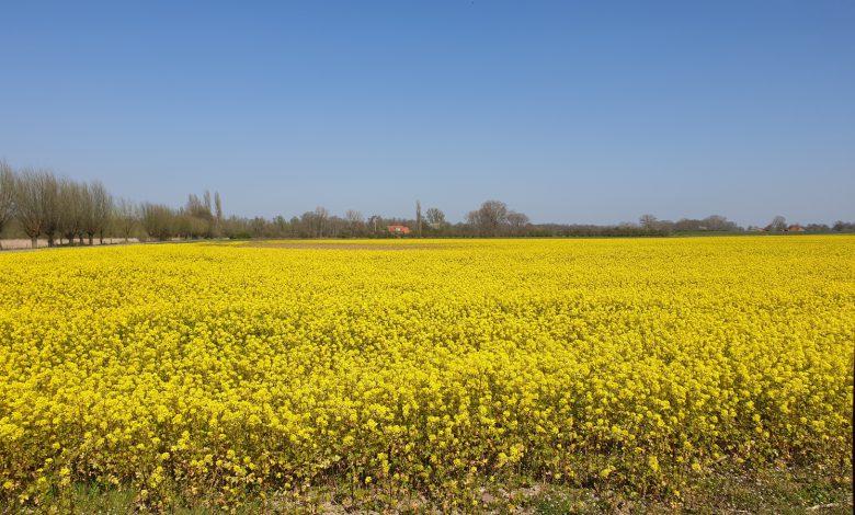 """Photo of Weerplaza: """"Eerste landelijk warme dag van het jaar!"""""""